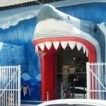 Escola de Natação Tubarão – Infantil e Adulto