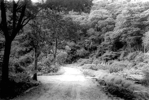 Ilha do Fundão 1948